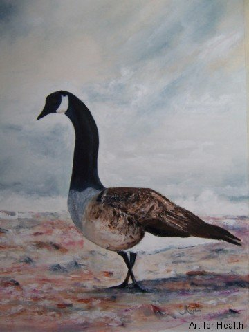 canada-goose-on-st-brides-beach-medium-web-view